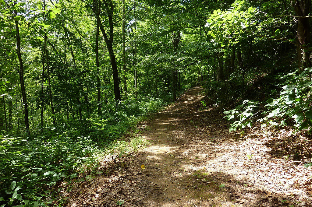 Walking Trail in woods